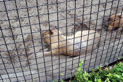 kapibara 01.jpg